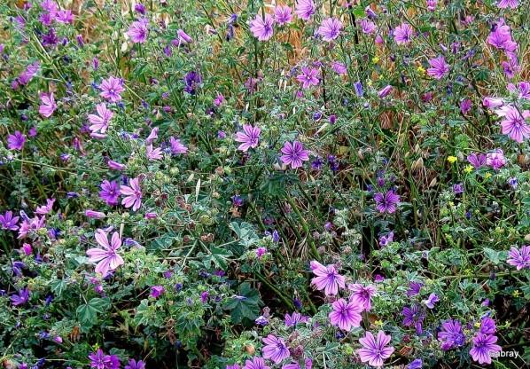 N02 - Fleurs de mauve