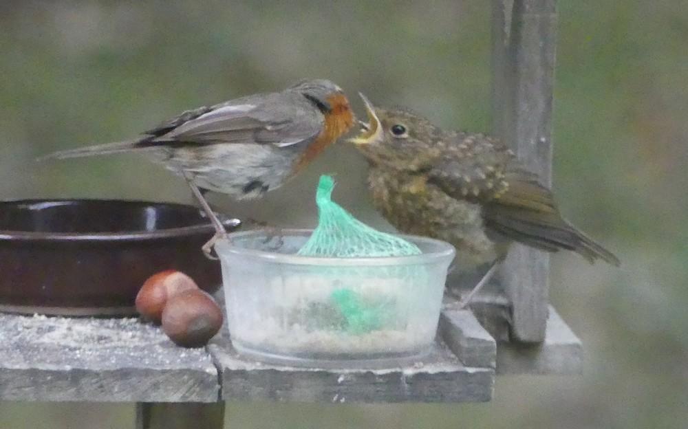Les oiseaux de mon jardin : une belle histoire...