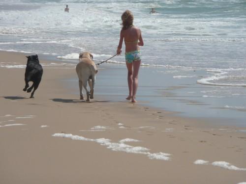 ballade sur la plage