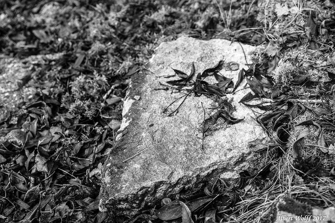 Nature(s) morte(s)