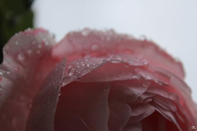 macros-fleurs 4739