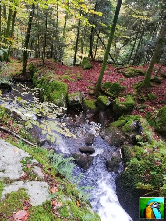 Les Vosges : Vallée de la Wormsa 2/2