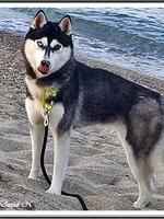 Naïka (17 mois)