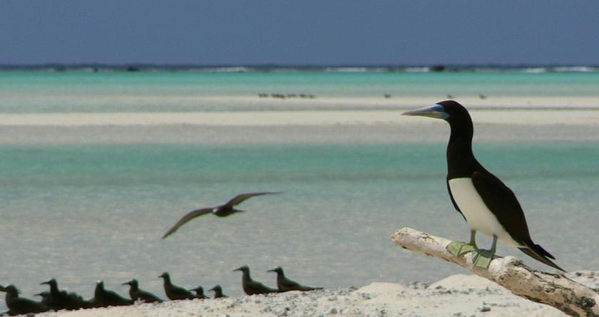 Encore une île aux oiseaux