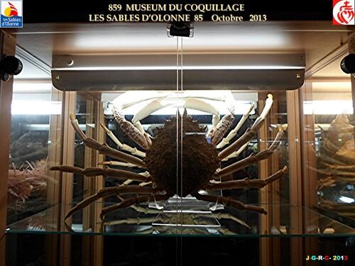 MUSEUM DU COQUILLAGE  13/14   vacances 10/ 2013  SABLES D'OLONNE    03/02/2014