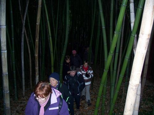 la bambouseraie ...