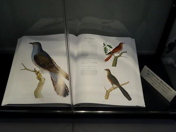 La remise des prix aux lauréats du concours-photo sur l'oiseau...