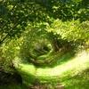 Chemin ombragé - entre Les Bondes et Roussillou (Riom-ès-Mgnes)