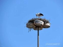 l'un des rares nids de cigognes ...