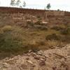 zaouit - cimetière juif