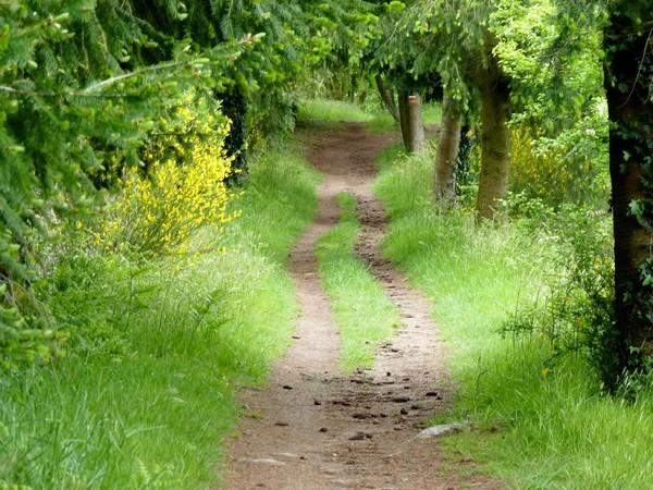 12 - Chemin en sous-bois