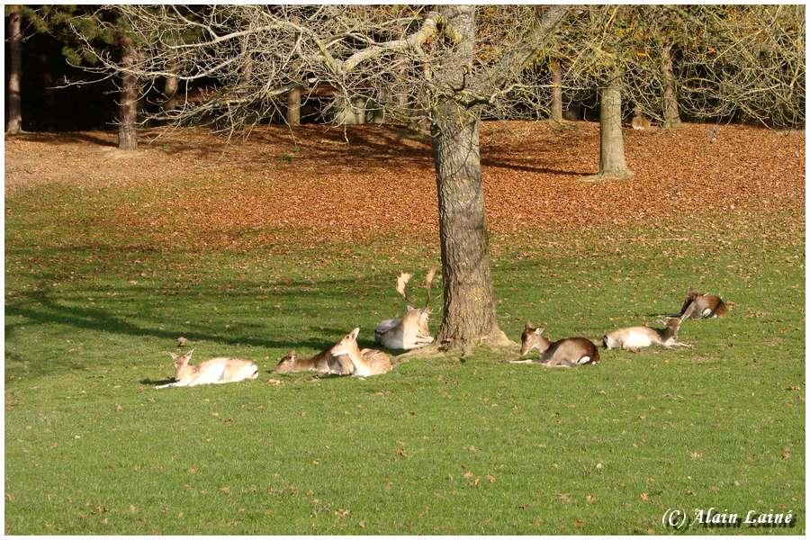 Animaux au Parc des Gayeulles