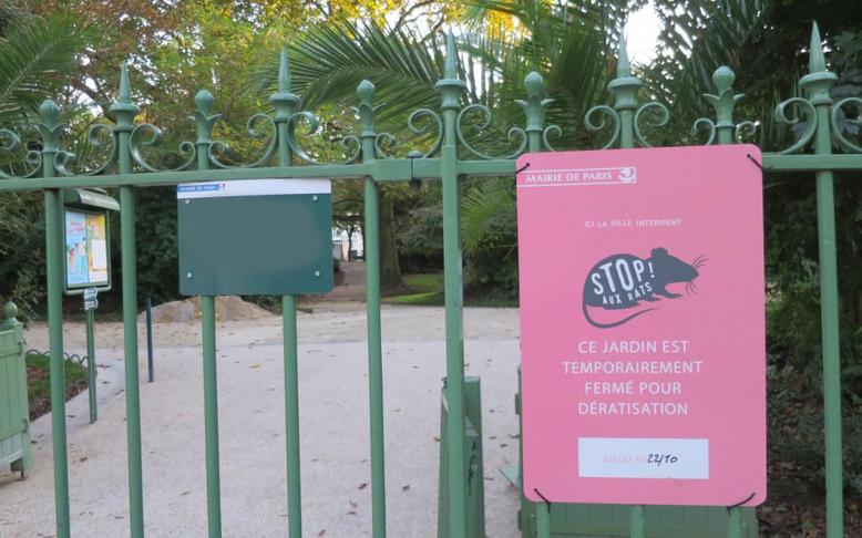 Prolifération des rats à Paris.