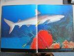Exposé n°1 Les requins
