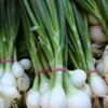 oignon blanc.jpg