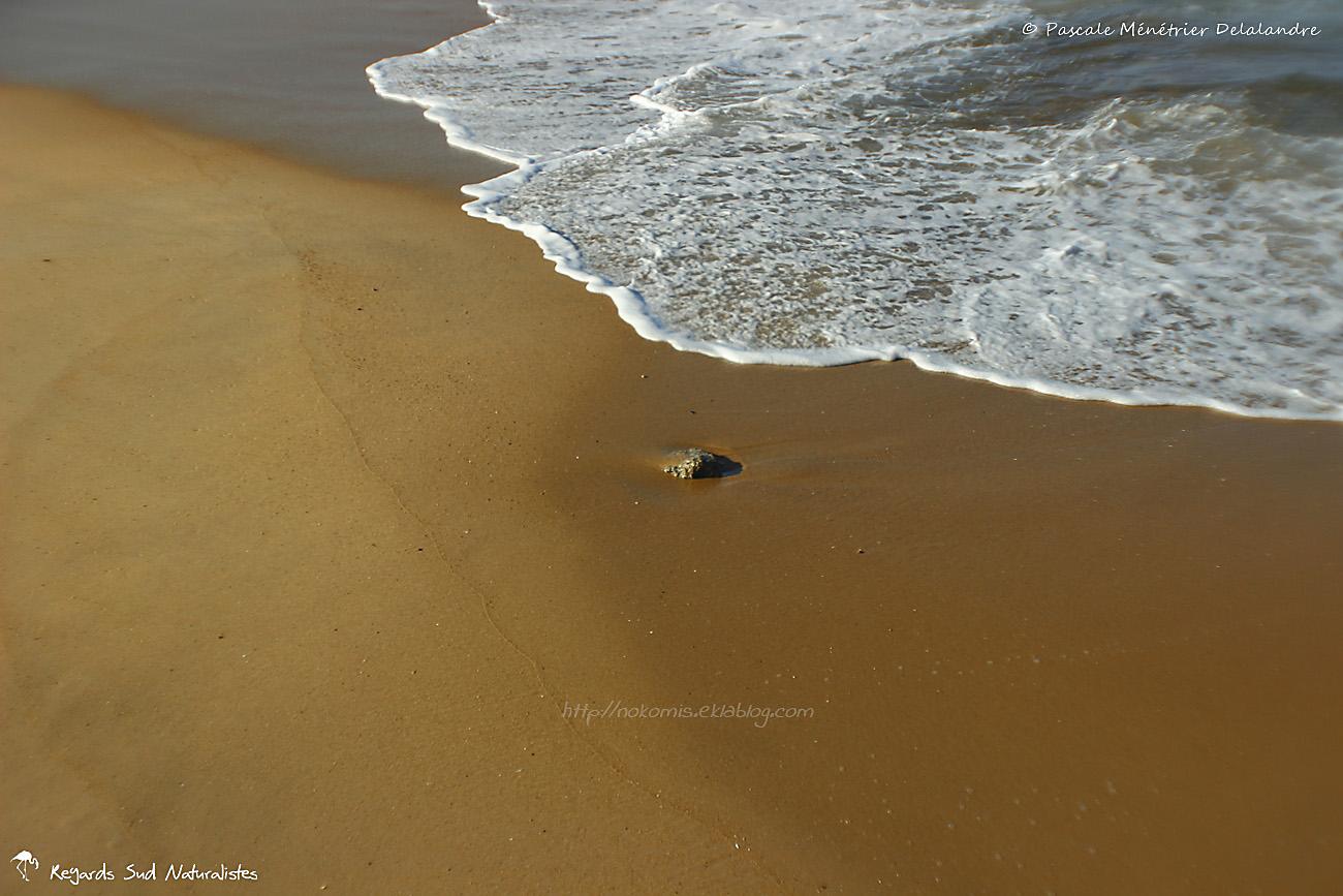 Entre sable et eau...