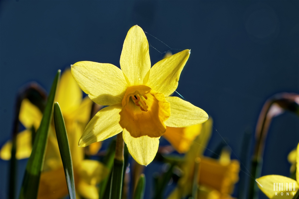 Un avant-goût du printemps