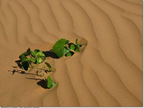 """Résultat de recherche d'images pour """"Dire Merci à la vie même dans un desert"""""""