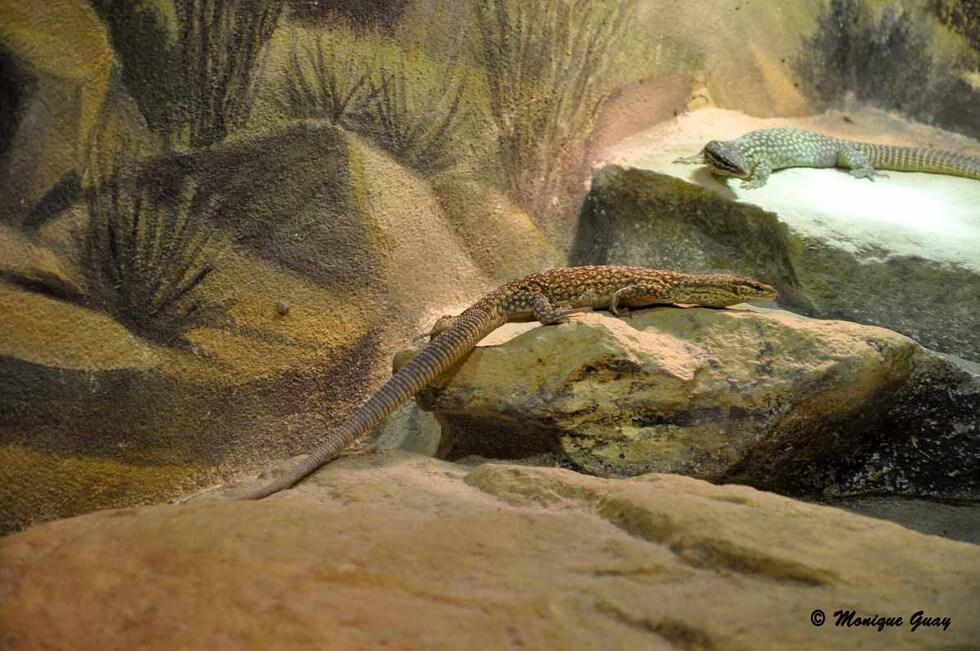 Quelques espèces de vivarium tropical