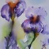 iris sur toile oct [640x480]