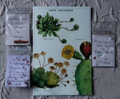 SOL 2020 - Missives fleuries (1)
