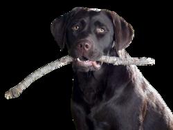honden tubes
