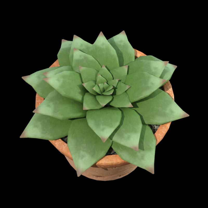 Image de plante grasse en pot (tube)