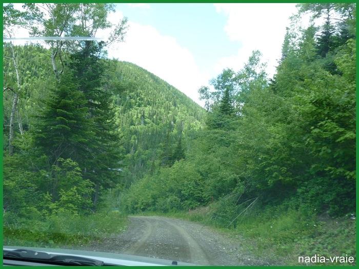 Des paysages verts. (Défi chaque mois chez khanel: (Février: Une couleur:vert)