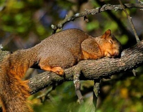 La vie d'un écureuil
