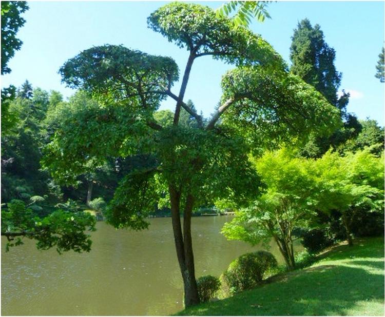Ambiance zen à  Maulevrier   (1)