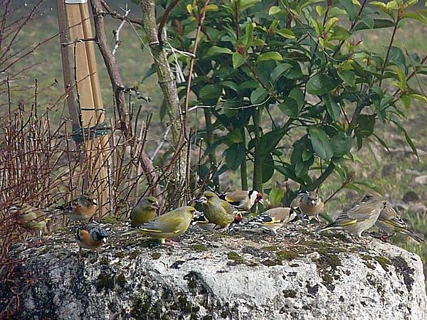 Oiseaux banquet