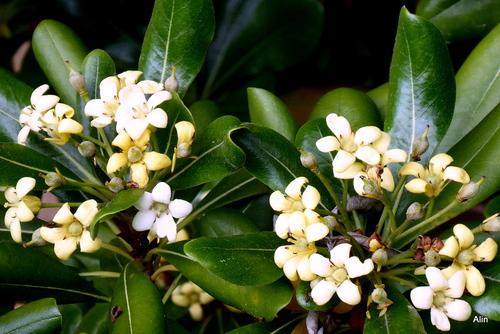 Des fleurs blanches ...