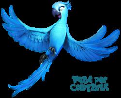 Tube oiseaux
