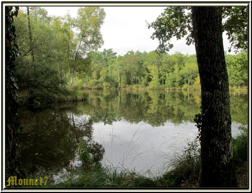 Promenade en forêt à Mirambeau (17)