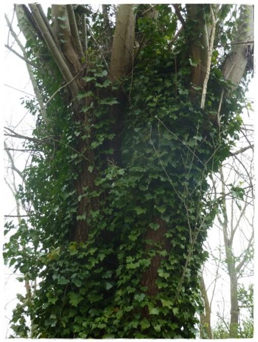 """""""Une plante attachante"""" ....."""