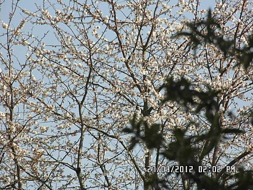 arbre-en-face-004.JPG