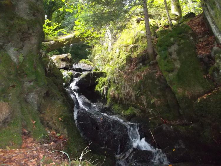 Vosges-Vallée de Munster #2