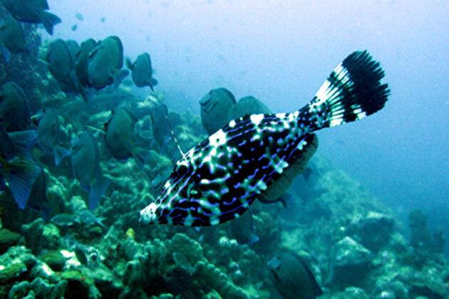 Le poisson Bourse-écriture