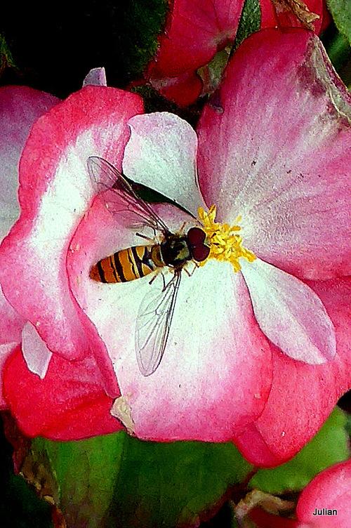 Un insecte : lequel ?