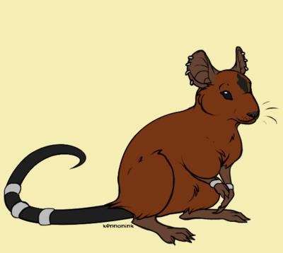 Dessins Rats