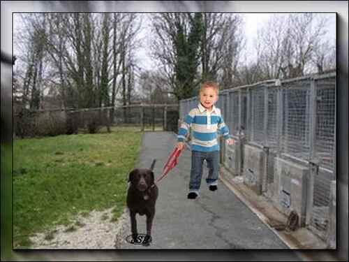 Le vieux chien et l'enfant