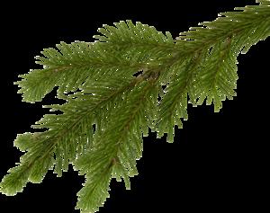 Tubes branches sapin de Noël 3