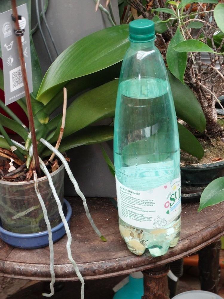 La potion magique pour orchidées et bonsaïs...