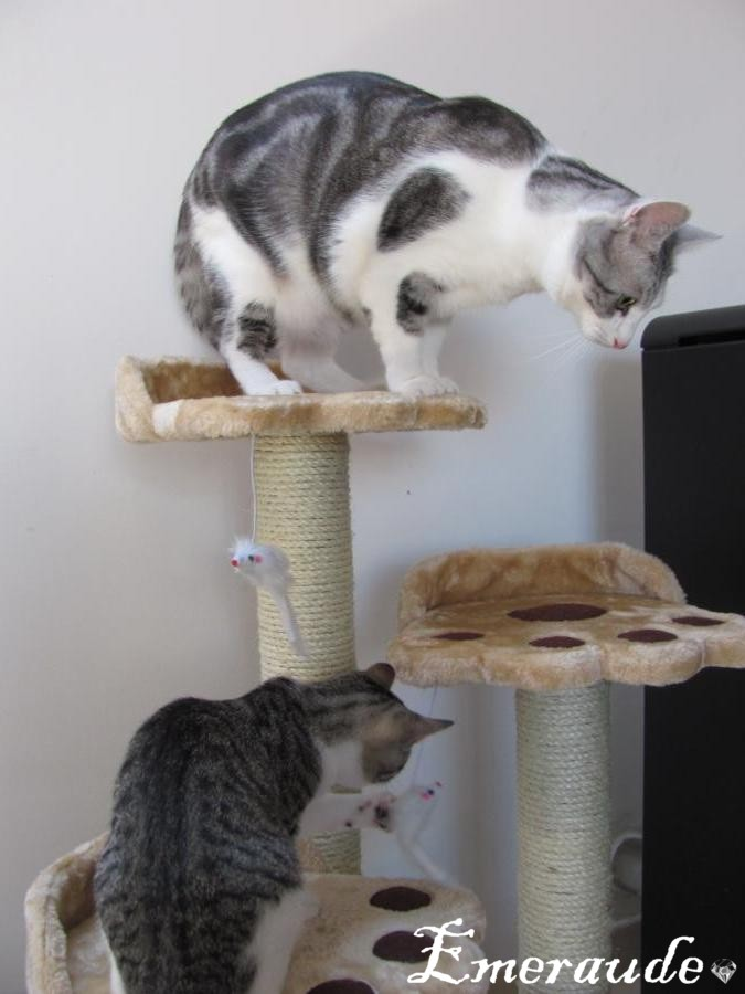 Photos: Kamikaz et Tornade sur l'arbre à chat
