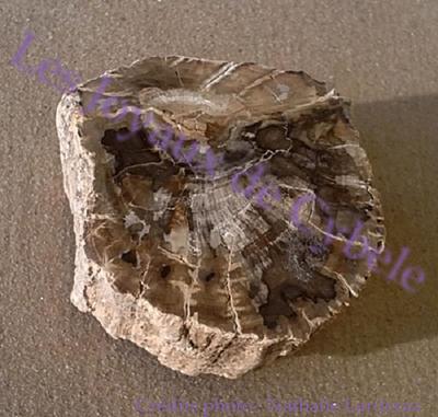 Agate xyloïde