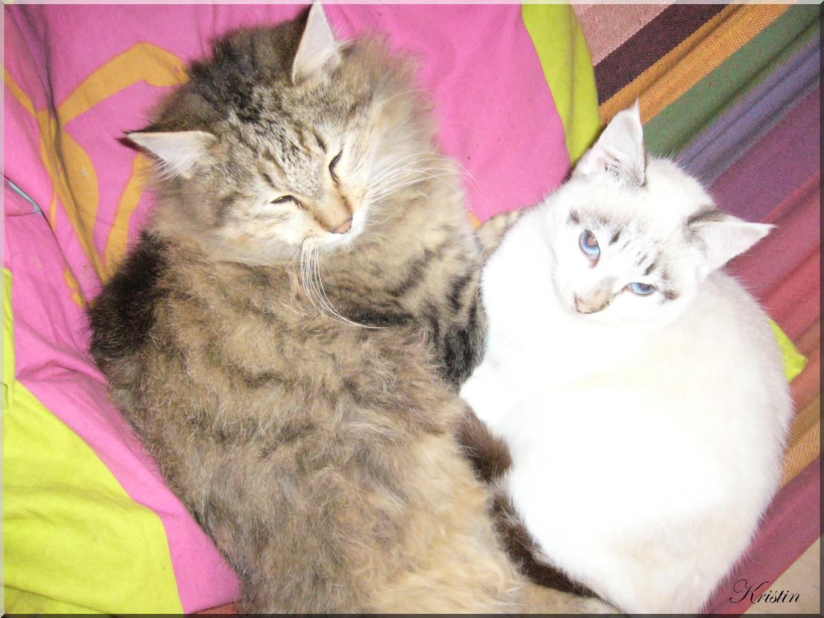 blog à chats