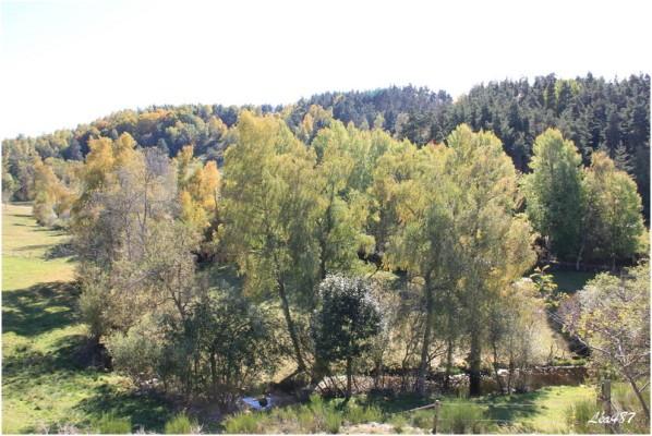 Saison-0288-Arbres-riviere.jpg