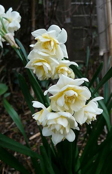 Narcisse-parfume--25-03-2010-083.jpg