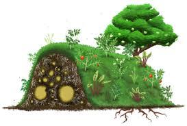 Cultivons plutôt nature ...