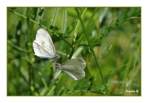 PapillonsDe